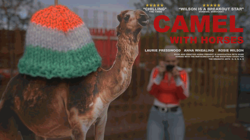 Camel With Horses Poster Rosie Wilson DAFTAS comedy